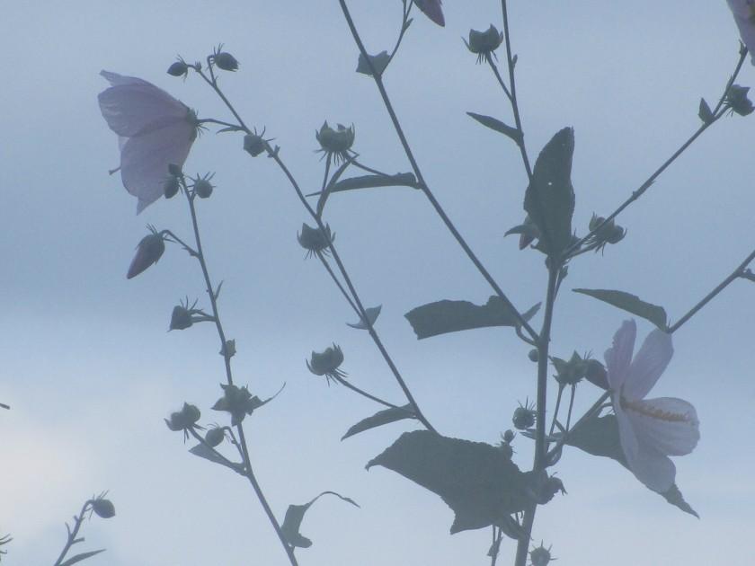 light on the flowers